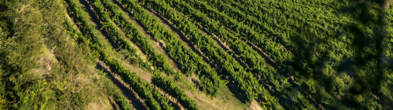 Les vignes tourisme en aveyron le pays rignacois - Camping les vignes lit et mixe site officiel ...